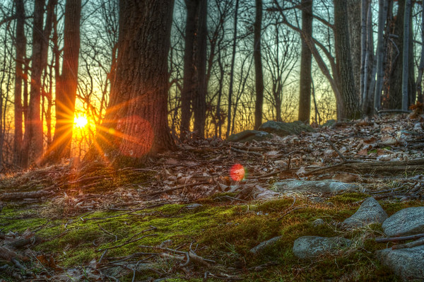 A golden glow emanates through the trees and highlights moss and leaves.