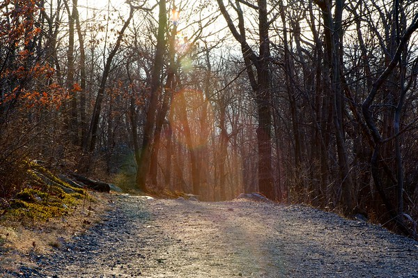 A gravel road leading up to the peak of the Tourne in Boonton, NJ is lit up with golden sunlight.