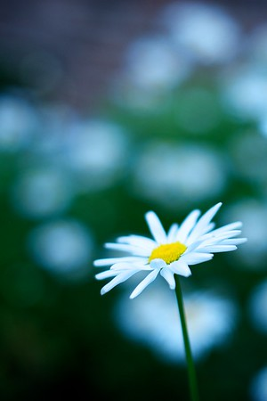 A delicate white flower with yellow center stands out from the bunch.