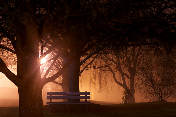 A dimly lit park with weeping willow trees and dense fog.  A starburst of light emits through the tree limbs.  The Calling is from a higher power...