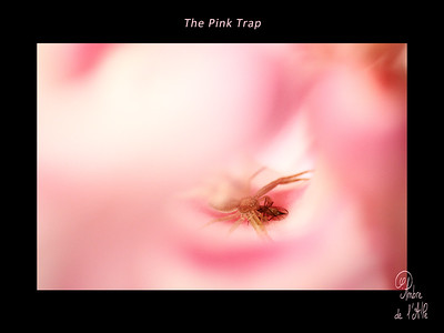 The Pink Trap