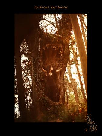 Quercus Symbiosis