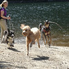 Cady romping with pals at Barclay Lake 8-8-14 Day 220