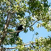 Bird in Tree 7-3-14 Day 215