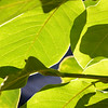 Leaves 7-27-14 Day 208
