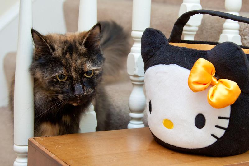 318_365 Hello Kitty