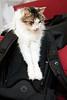 221_365 Cat on a Bag