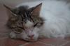 232_365 Floor Cat