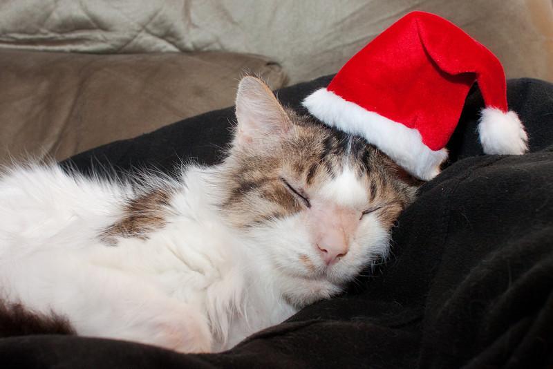 357_365 Santa Cat