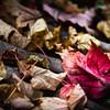 Autumn shade