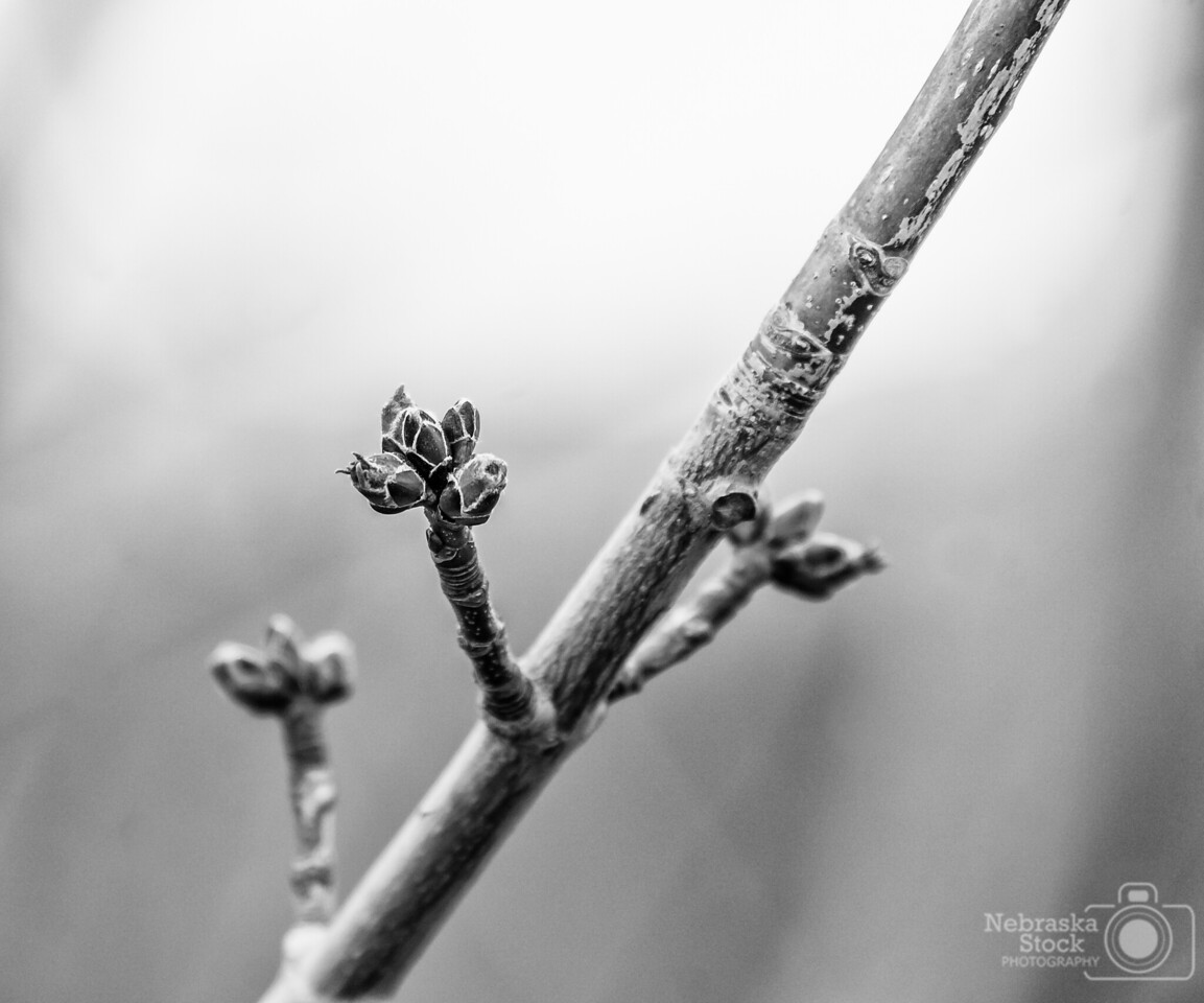 4-9-2018<br /> 99/365<br /> Walking along the river tonight I was noticing the trees are starting to get a lot of buds on them. Now we just need some nice spring weather. Pretty sure Northeast Nebraska is pretty tired of the cold weather by now.....Come on Mother Nature, bring on some 70 and 80 degree weather!!!!<br /> Photo taken with a Sony A6300 with a Sony 18-200<br /> ISO 400<br /> 1/90th at F6.3<br /> (55765)