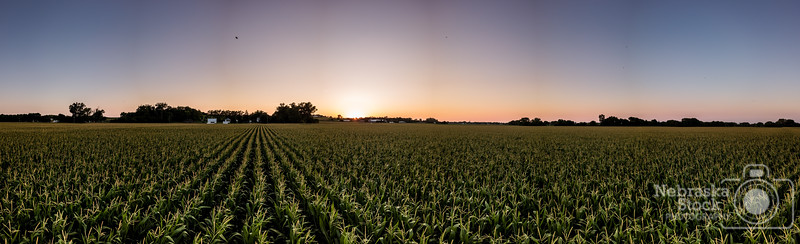 7-10-2018<br /> 191/365<br /> The corn is starting to tassel out in Northeast Nebraska. One of the most important times for corn to grow. We will start to see the farmers turn on the irrigation pivots now to help the process out. This pano was taken with 21 pictures.  <br /> Photo taken by DJI Mavic Pro <br /> ISO 100<br /> 1/160th at F2.2<br /> (114566)