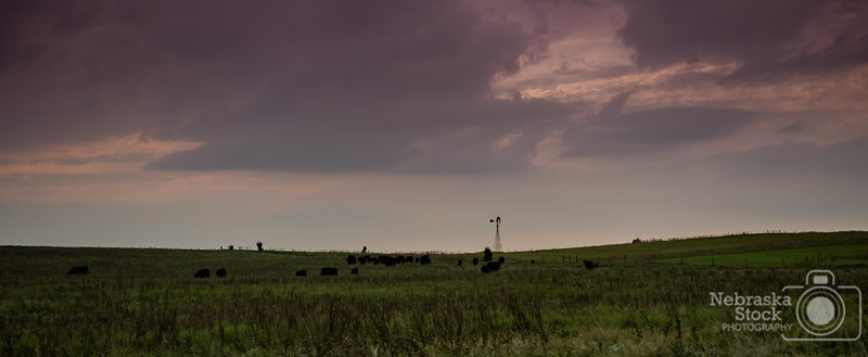 9-19-2018<br /> <br /> 262/365<br /> <br /> A heard of cows graze in a pasture as a little storm rolls in early evening in Wayne County Wednesday. <br /> <br /> Photo taken with a Nikon D4 with a Nikon 28-70<br /> <br /> ISO 400<br /> <br /> 1/1000th at F4<br /> <br /> (159960)