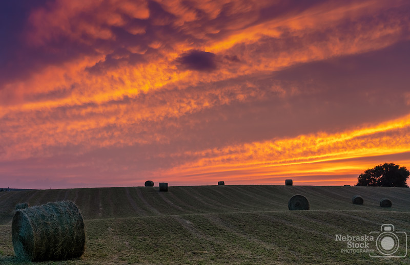8-13-2018<br /> 225/365<br /> A good sunset scene from Northeast Nebraska. Photo taken in Madison County. The light from the sunset Monday night was amazing. Just had to wait a little bit after the sun went down. <br /> Photo taken with a Sony A7rIII with Sony FE 24-105<br /> ISO 800<br /> 1/200th at F4<br /> (140284)