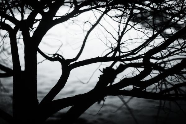 tree, night