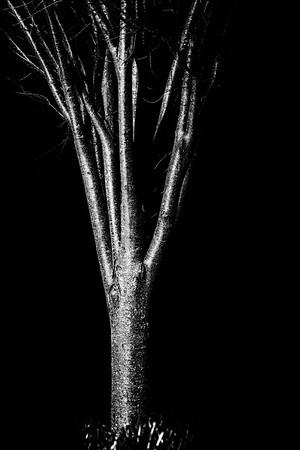 the hands of earth reach nightward