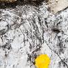 yellow alone