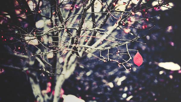 solitary remainder