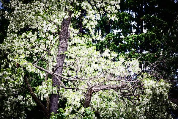 entropy flowering