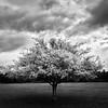 156 - a tree