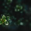 235 - leaves