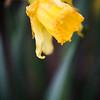 099 - a flower