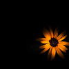 232 - light painting a flower
