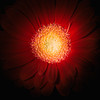 278 - play!  Do light painting of flowers