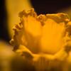 108 - a flower