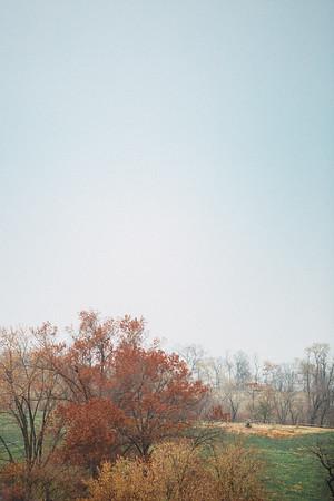 320 - a vertical landscape