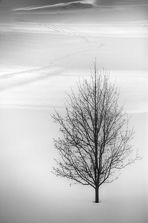 024 - a tree
