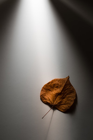 061 - light and shadow