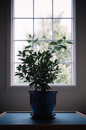 244 - a tree