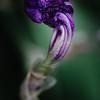 044: Photograph an asymmetrical subject