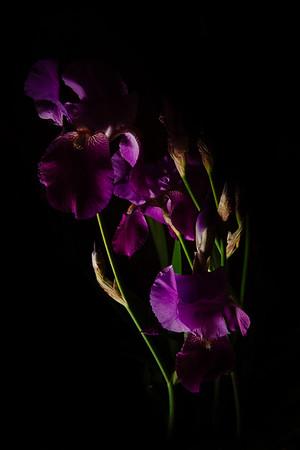024: Photograph an asymmetrical subject