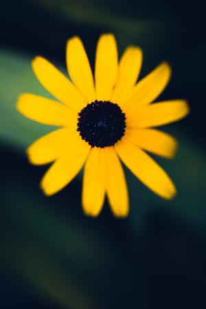 133: Photograph a symmetrical subject