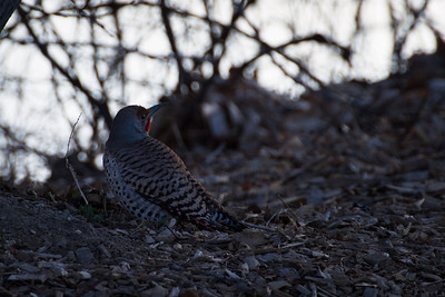 71 of my 365 project;  Flicker