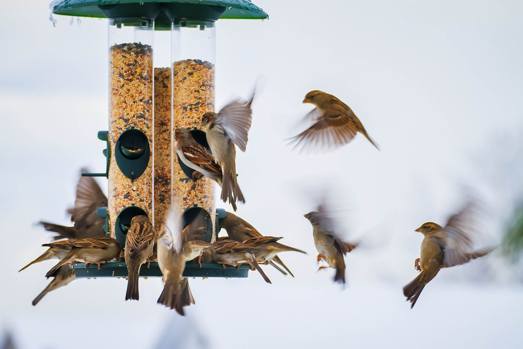 350 of my 365 project; the Birds