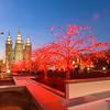 355 of my 365 project Photowalking Utah