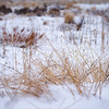 361 of my 365 project; cold snowy day