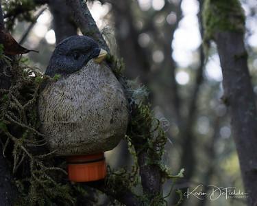 GC22E2A Unknown Cache Bird's Eye View