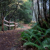 WM1FYJ_China_Lake_Nature_Area_Tacoma_Washington