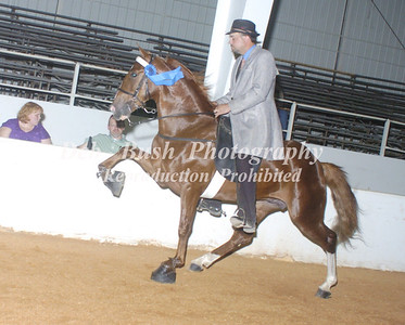 CLASS 34  RACKING SPECIALTY ACTION 2 YR OLD