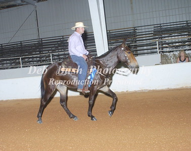 CLASS 5A  MULE GAITED  PLEASURE
