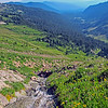 """Goat Rocks—Goat Lake Hike/CampWA-20aug2016. <br>https://connect.garmin.com/modern/activity/1315013895<br>Goat Rocks Wilderness in the Snoqualmie/Gifford Pinchot National Forest on the crest of the Cascade Range. <br>Hot Hike. One of the hottest days of 2016. Bill and I embarked on Snowgrass Trail #96 and reached camp a little over 5-miles later. Did a quick set-up of tents and then traversed another 2+miles on the Lily Basin Trail to Goat Lake. The aqua-marine waters were tempting in the afternoon sun, but we elected to only cool our heels and not take the deep dive into the glacier waters, like several hikers around us. The vista views from trail #86 were incredible. I felt like I needed to keep my cameras on panoramic mode. Crossing waterfalls, looking up at mountain goats on the ledges of Hawkeye Point, gazing across the lush green/flowers blooming valley at Mount Adams. 10-miles/2500' elevation gain of hike in a photographers paradise. Back at base camp, we ate dinner around the campfire and talked world affairs with our Russian neighbors. A very memorable, very cool all-around experience. I awoke around 2am thinking someone was shining a light into my tent. Poked my head out and was greeted by a shockingly bright full moon and spectacularly clear star-field that reminded me of the night I summited Rainier. Little did I know, my fav take-away from this hike/campout (photography """"magic moment"""") was about to happen at sunrise on the Pacific Coast Trail…<br>Mt Adams<br><br>WA-goat_rocks-20aug2016i9048"""