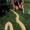 Andrea and Gabby Bernier, 5, pet a burmese python during the 3D bow hunting event that was held at Hollis Hills Farm, co-sponsored by Boston Bow Hunters, on Saturday, July 22, 2017. SENTINEL & ENTERPRISE / Ashley Green