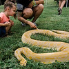 Ainsley Westgate, 3, pets a burmese python during the 3D bow hunting event that was held at Hollis Hills Farm, co-sponsored by Boston Bow Hunters, on Saturday, July 22, 2017. SENTINEL & ENTERPRISE / Ashley Green