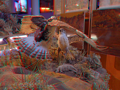 Buffalo Bill Center of the West Cody Museum 3D