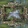 Quad mirror image