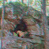 Bobcat at Mossrock